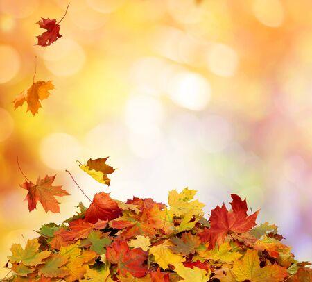 Foto de Autumn falling maple leaves - Imagen libre de derechos