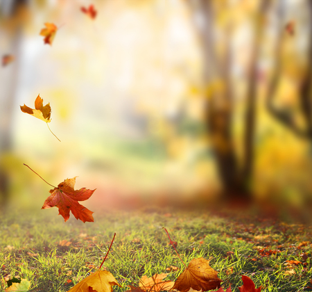Falling Autumn Leaves backgroundの写真素材