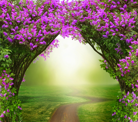 Foto de Fantasy background. Magic forest with road.Beautiful spring landscape.Lilac trees in blossom - Imagen libre de derechos
