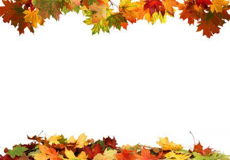 Photo pour Isolated autumn leaves - image libre de droit