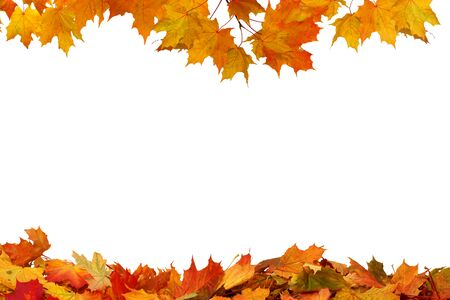 Photo pour Autumn colored falling maple leaves isolated on white background - image libre de droit
