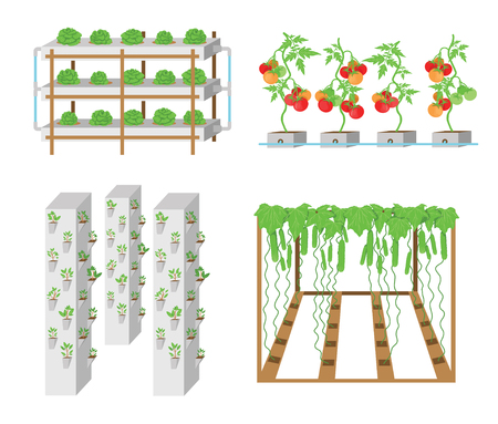 Illustration for Set of hydroponic plant growth systems. Vegetables and grass growing in nutrient flow systems with water in greenhouse without soil. Color vector illustration. Modern biotechnology - Royalty Free Image
