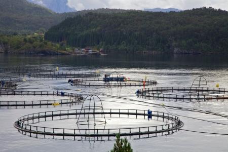 Fish farming site