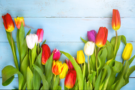 Photo pour Pink tulips on wooden blue background. Conception holiday, March 8, Mother's Day. spring background - image libre de droit