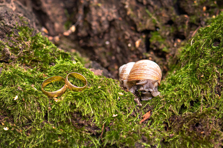 Foto de wedding rings newlyweds in the nature, lie on the moss next to the snail. place for text - Imagen libre de derechos