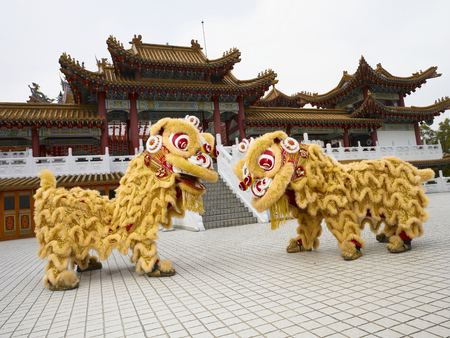 Photo for 2 lion dance performers facing each other - Royalty Free Image