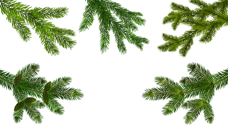 Illustration pour Christmas, New Year. Set from the five green realistic branch of fir or pine close-up. branched out. Isolated on white background. vector illustration - image libre de droit