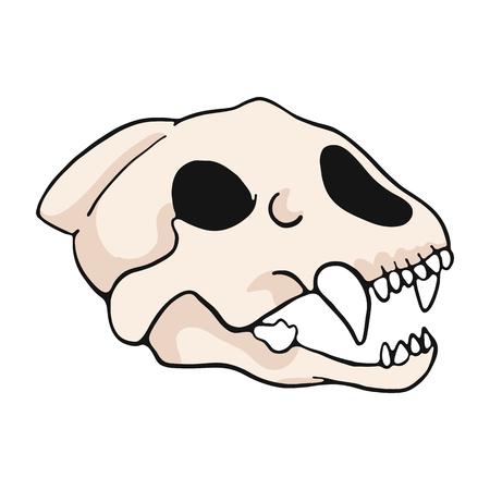 Illustration pour Tiger skull cartoon vector illustration motif set. Hand drawn isolated big cat bone elements clipart for nature blog, natural history bone skeleton graphic, anatomy education web buttons. - image libre de droit