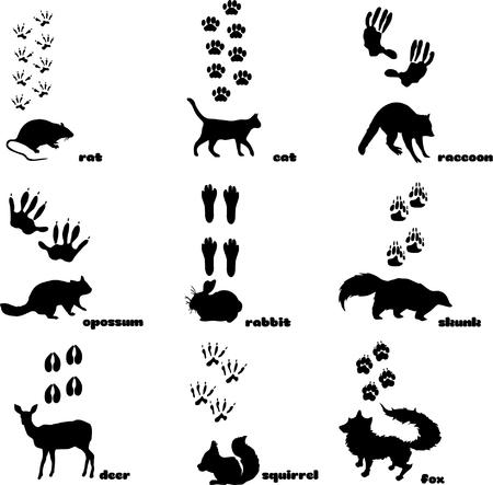 Illustration pour Animal Footprint Track Vector on plain background. - image libre de droit