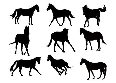 Illustration pour Set of black silhouette of horses on white background. Collection various forms, pose. Jumps, plays,walks. Elements for design, pet shop, food for animals, equestrian school. Vector illustration - image libre de droit