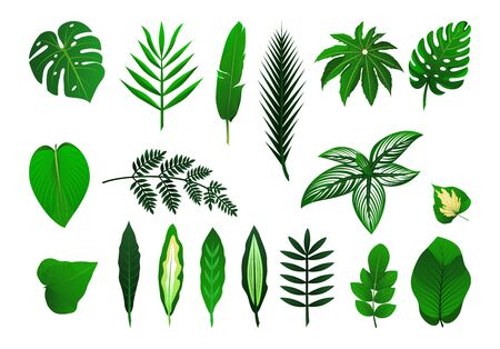 Illustration pour Icon set of different tropical plants leaves. Palm, monster, banana. Vector isolated illustration. As template for graphic design, pattern, wallpaper for web - image libre de droit