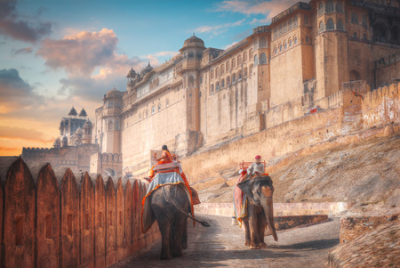 an elephant walking along the road at Amber Fort. India. Rajasthan