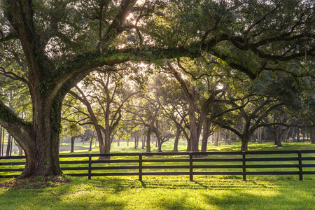 Foto de Large oak tree branch with farm fence in the rural countryside looking serene peaceful calm relaxing beautiful southern tranquil magical - Imagen libre de derechos