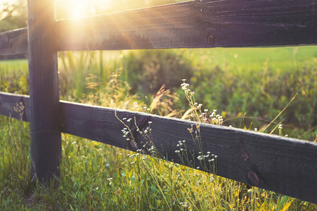 Photo for Sunrays on rural black country fence with lesser prairie fleabane little white flowers growing wild on both sides in peaceful romantic setting - Royalty Free Image