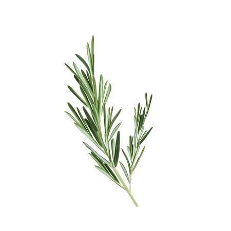 Ilustración de Sprig of rosemary vector illustration. Rosemary herb - Imagen libre de derechos