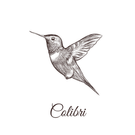 Hummingbird sketch hand drawing. colibri vector illustration of a birdのイラスト素材