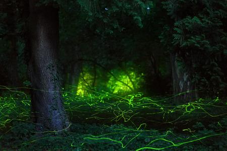 Photo pour Fairytale scene fireflies night forest - image libre de droit
