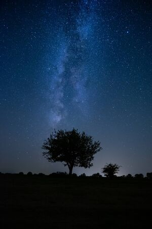 Photo for Lonely tree under the night sky milkyway - Royalty Free Image