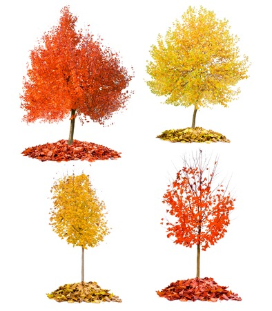 Collection of trees with red and yellow leaves isolated on white