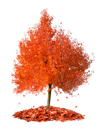 Photo of tree with orange leaves falling down isolated on white