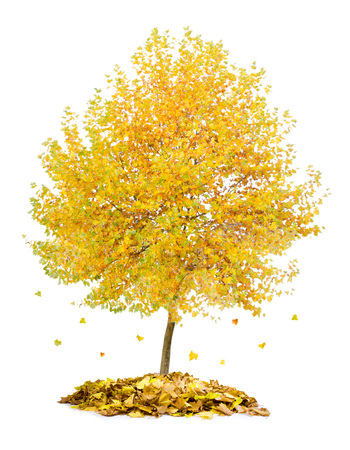 Photo of tree with yellow leaves falling down isolated on white