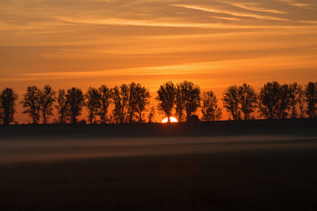 Photo pour Silhouettes of a trees against a rising sun in the fog - image libre de droit