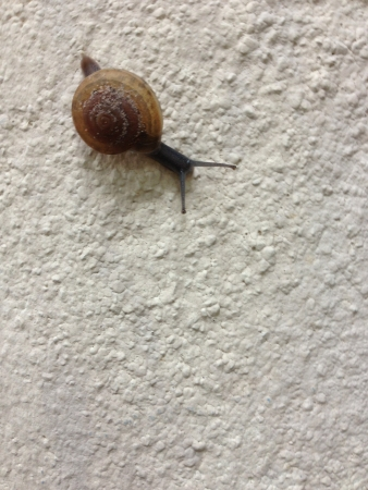Snail slowly move
