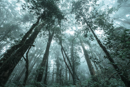 Rainforest Travel At Kew-Mae-Pan Thailand
