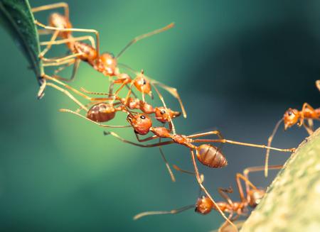 Photo for Ant bridge unity - Royalty Free Image