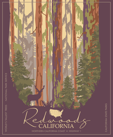 Illustration for Redwoods park in California vector colorful poster. State parks. World's tallest trees. - Royalty Free Image