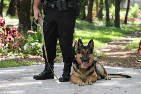 A police officer and his police dog.