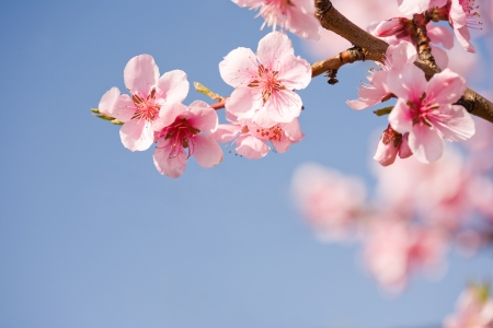Beautiful colorful fresh spring flowers with clear blue sky.