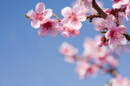 Photo pour Beautiful colorful fresh spring flowers with clear blue sky. - image libre de droit