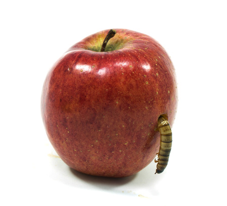 worm is coming out of bitten apple isolate on white