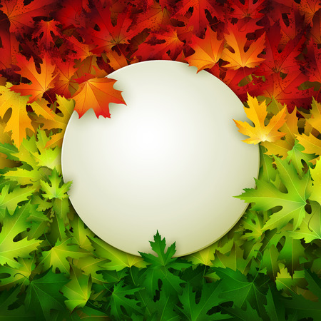White banner for your design on colorful autumn leaves background, vector illustrationのイラスト素材