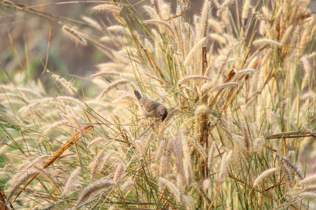 Little bird among grasses