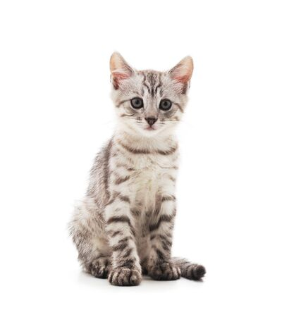 Photo for Little gray kitten isolated on a white background. - Royalty Free Image
