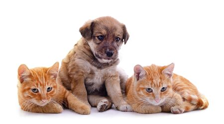 Photo pour Two cats and dog isolated on a white background. - image libre de droit