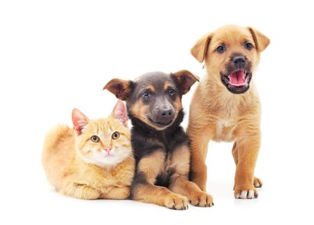 Photo for Two dogs and a cat isolated on a white background. - Royalty Free Image
