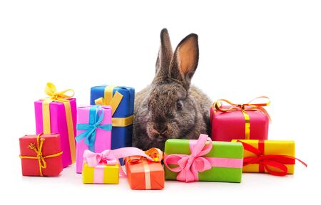 Photo pour One brown rabbit with gifts isolated on a white background. - image libre de droit