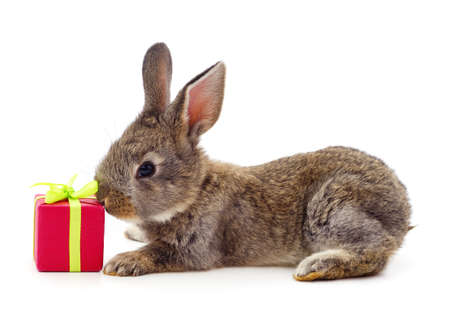 Photo for One brown rabbit with gifts isolated on a white background. - Royalty Free Image