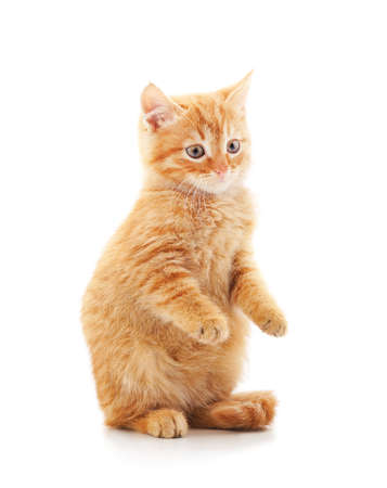 Photo pour Little red kitten isolated on a white background. - image libre de droit