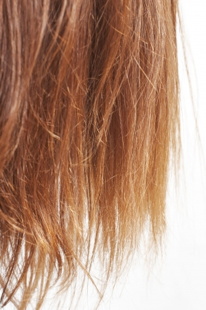 Closeup of chestnut natural hair split ends isolated on white with selective focus