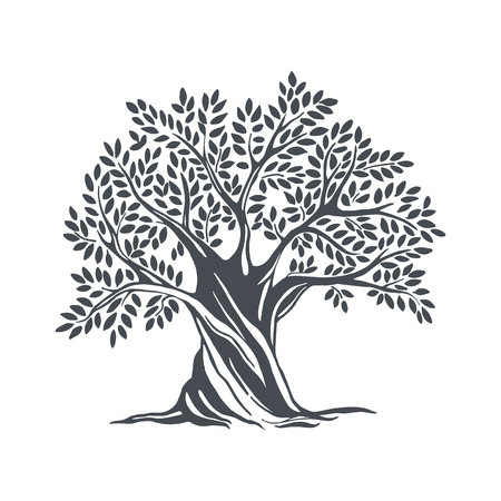Illustration pour Hand drawn olive tree. Vector sketch illustration - image libre de droit