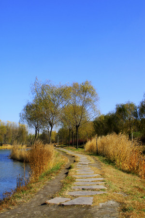 weeds and path in the late autumn season, north china