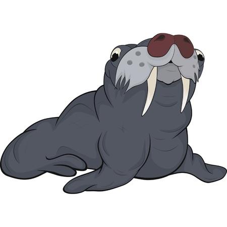 Seal.Cartoon