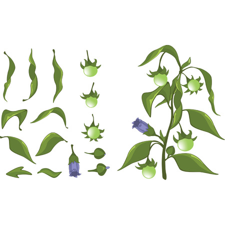 Illustration of a Set of Green leaves