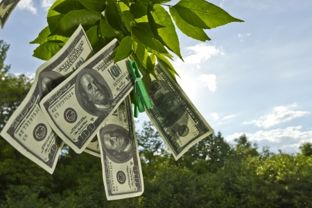 Dollar currency hanging on green tree leafs