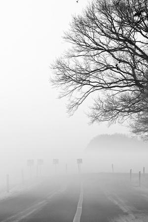 a winter landscape on a december morning