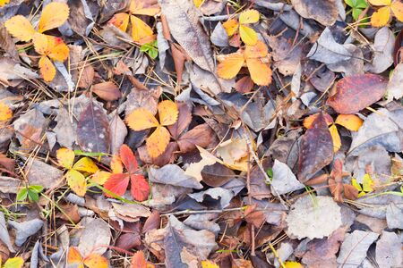 Photo for Brown autumn leaves on the ground - Royalty Free Image